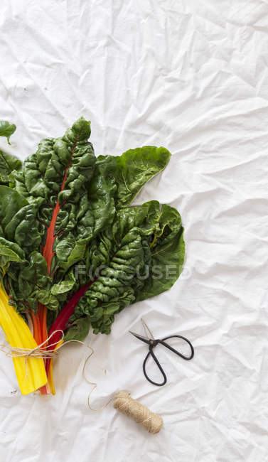 Bunch of fresh chard on wrinkled white cloth near small scissors and thread — Stock Photo