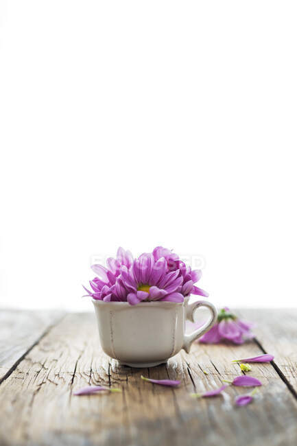 Small porcelain cup with lilac petals of delicate flower placed on lumber tabletop against white background — Stock Photo