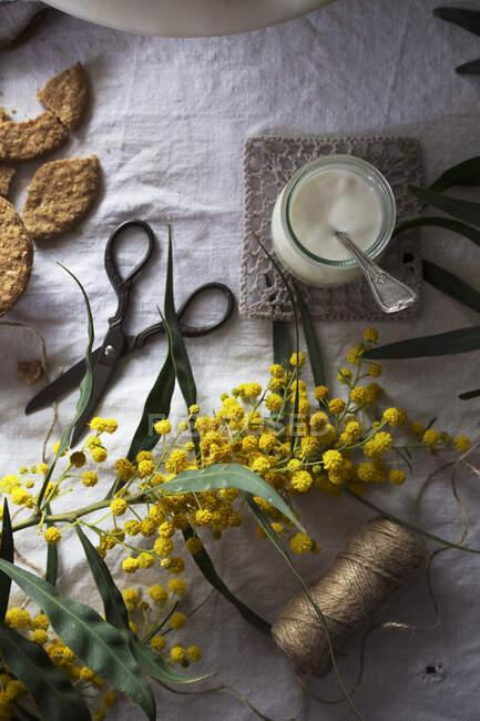 Dall'alto forbici d'annata e filo di lino posto su tessuto bianco vicino a fiori gialli e dessert freschi — Foto stock
