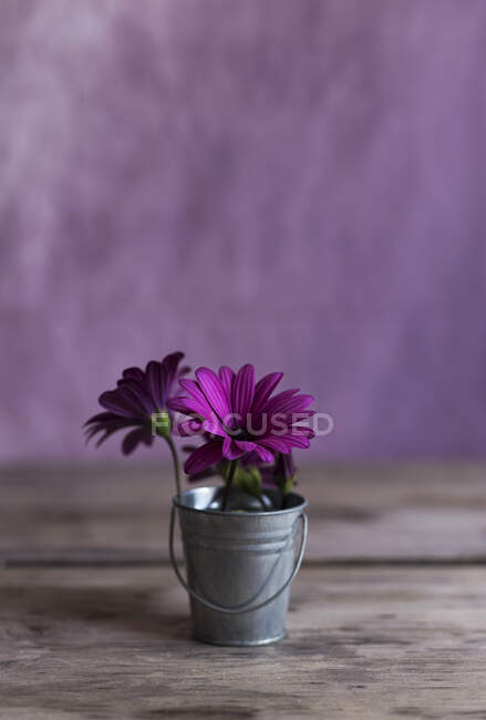 Tiny metal bucket with bright purple flowers placed on lumber tabletop — Stock Photo
