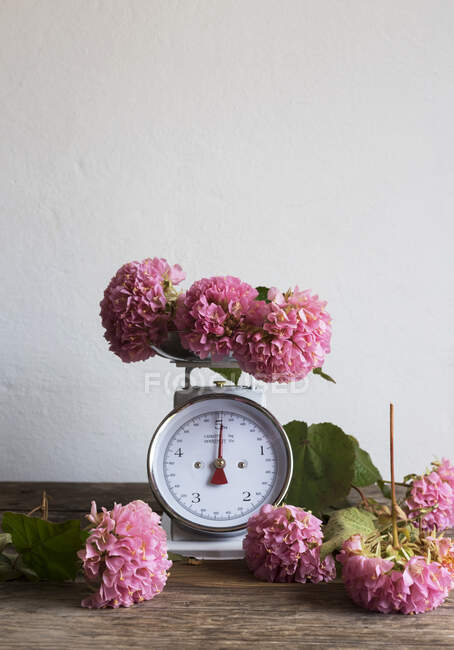 Bunch of beautiful pink flowers placed on weighing balance and wooden table against white wall — Stock Photo