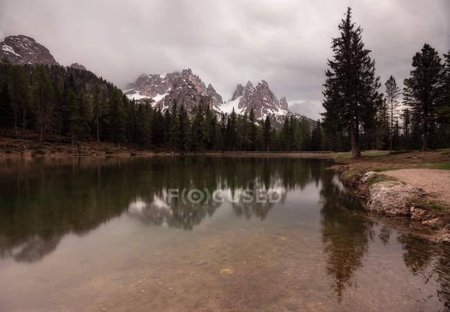 Маленький пруд в пышной траве с мостом в лесу — стоковое фото