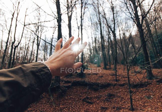 Рука мужчины-путешественника, простирающегося к солнечному свету среди стволов голых деревьев в осеннем лесу — стоковое фото