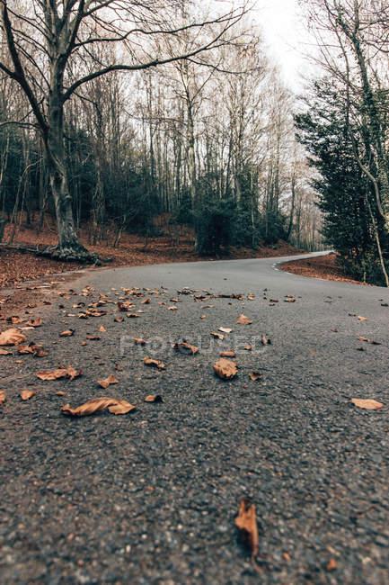 Carretera pavimentada vacía entre árboles otoñales desnudos en bosque soleado - foto de stock