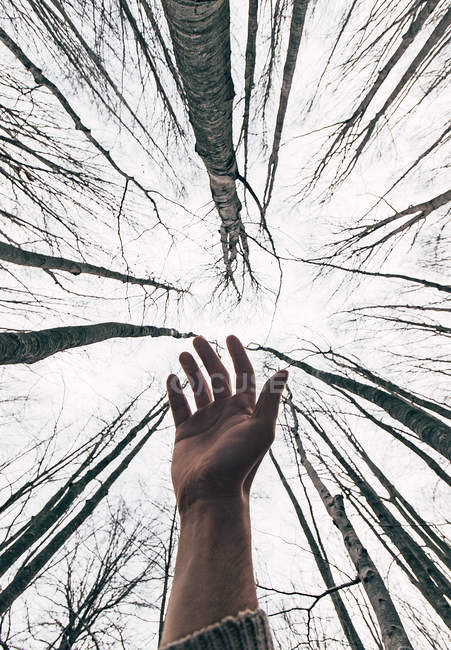 Crop hand of male traveler outstretching towards high tree branches in forest — Stock Photo