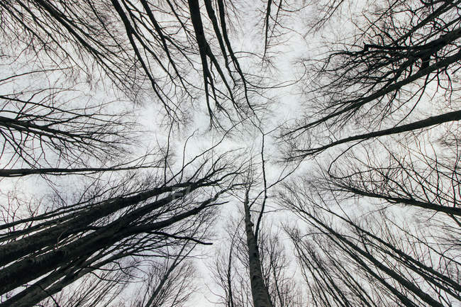 From below view of high tree branches against sky in forest — Stock Photo
