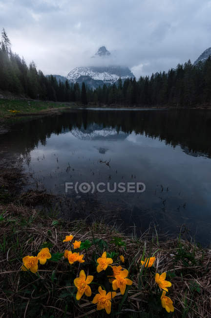 Bright yellow flowers in meadow surrounded by forest and mountains — Stock Photo