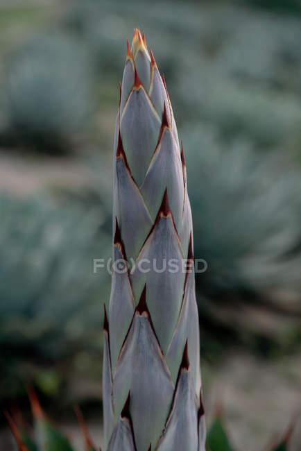 Суккулентный фрагмент ростков на размытом фоне сельхозугодий — стоковое фото