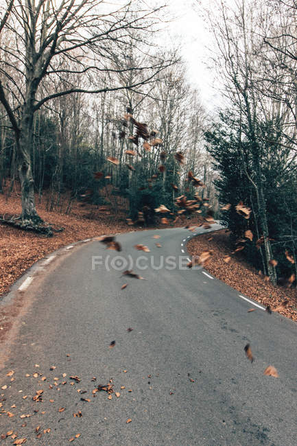 Empty paved roadway with flying leaves among bare autumnal trees in sunny forest — Stock Photo