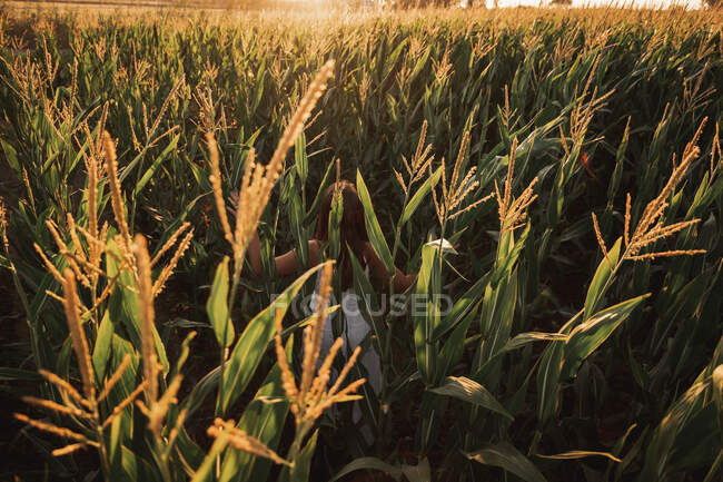 Back view of kid among ripe mature ears of wheat in contrast sunlight in field — Stock Photo