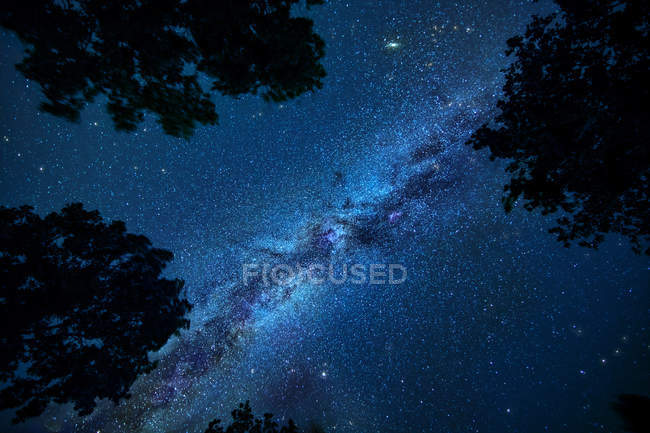 Night sky with Milky Way and silhouette of trees — Stock Photo