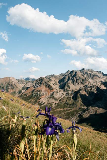 Нежный пейзаж очаровательного цветка, растущего под ярким солнечным светом в горном валу. — стоковое фото