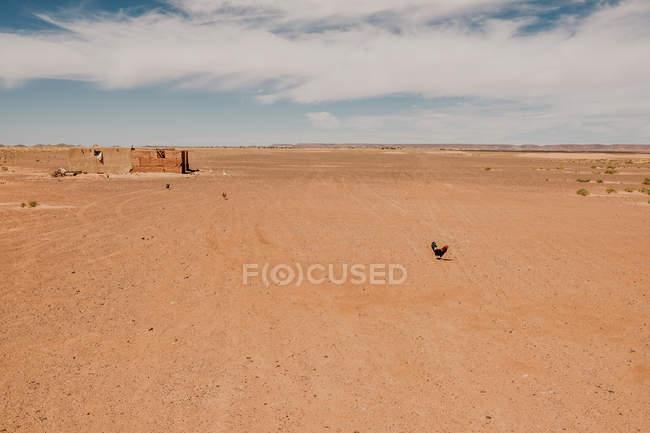 Orologio nel bel mezzo di un grande deserto contro il cielo grigio in Marocco — Foto stock