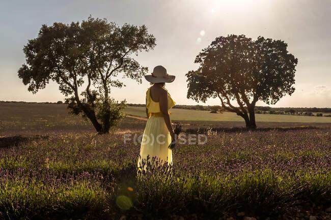 Visão traseira da mulher romântica em chapéu e vestido amarelo desfrutando de vista pitoresca do campo de lavanda no dia ensolarado — Fotografia de Stock