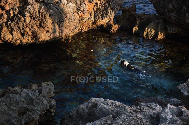 Natação de cães com vara no mar — Fotografia de Stock