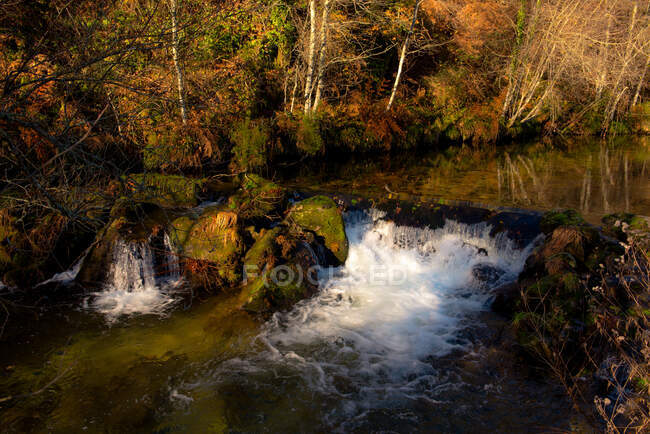 Small river and cascade near thin trees on sunny calm day in wonderful autumn forest — Stock Photo