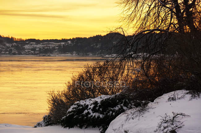 Leafless trees growing at peaceful frosted river bank at winter on vibrant sunset — Stock Photo