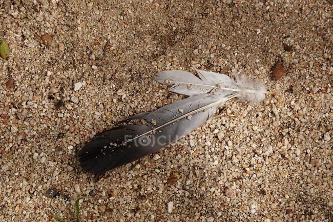 Погребение птиц на земле с помощью булыжника и песка — стоковое фото
