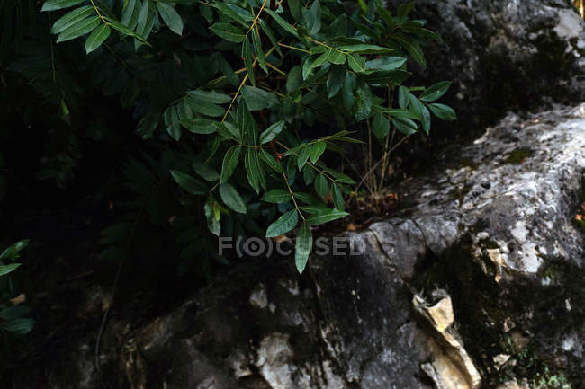 From above green lush leaves on bush growing in dark forest gorge — Stock Photo