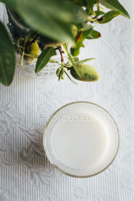 Top view of glass with almond milk next to green plant on kitchen table with lace cloth — Stock Photo