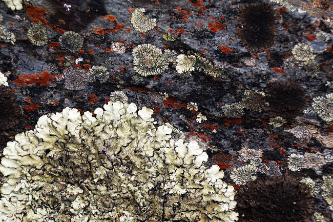 Closeup of natural abstract lichen growing on bark of old tree — Stock Photo