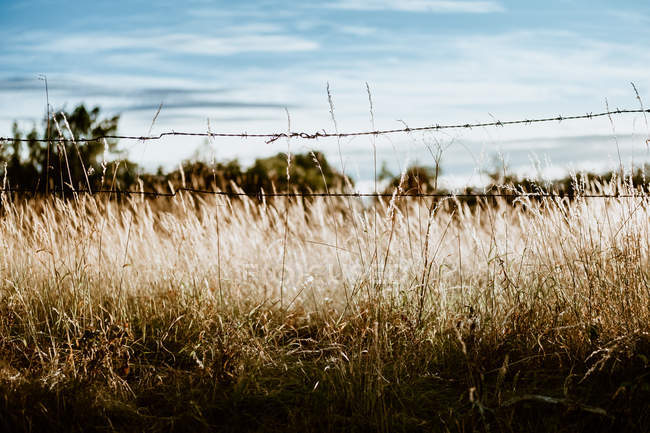 Спокойное сухое поле с забором из колючей проволоки против голубого неба при солнечном свете — стоковое фото