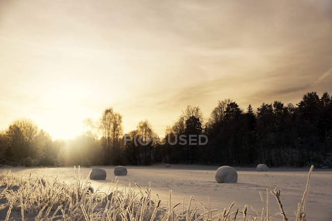 Smooth frozen field with snow covering hay rolls in sunlight above distant dark forest in winter season — Stock Photo
