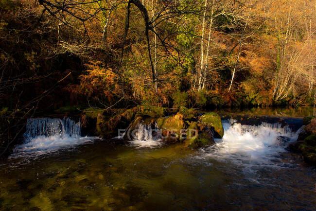 Pequeño río y cascada cerca de árboles delgados en un día soleado y tranquilo en un maravilloso bosque otoñal - foto de stock