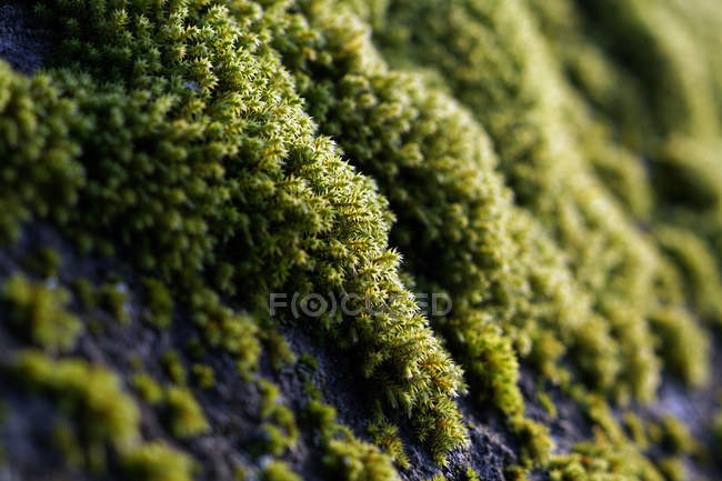 Детальное закрытие цветных зеленых млекопитающих, растущих на скалах — стоковое фото