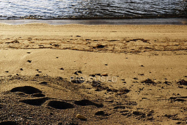 Stones placed on wet sandy shore on sunny daytime in nature — Stock Photo
