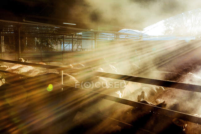 From above herd of cows in stable standing under warm shiny sun light — Stock Photo