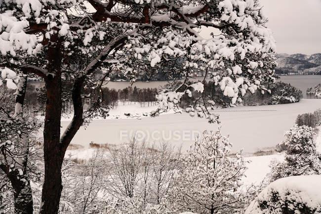 Valle collinare panoramica rurale con alberi ricoperti di neve e riva del lago con tempo cupo in Norvegia — Foto stock