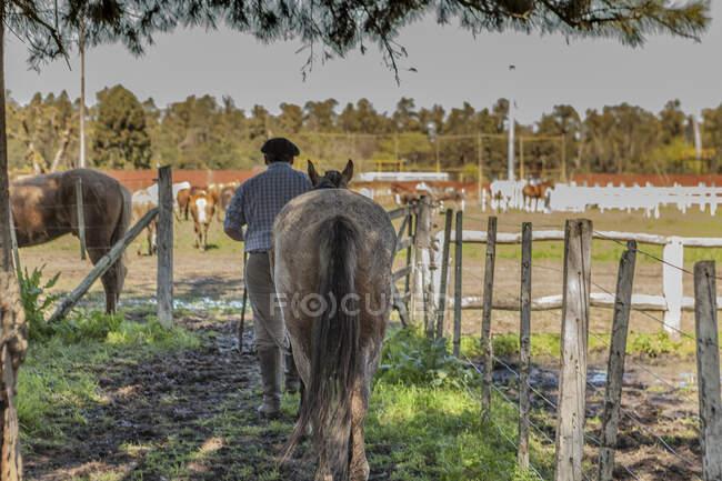 Задний вид жениха в высоких сапогах, держащего сильного коня в сарае в яркий день — стоковое фото