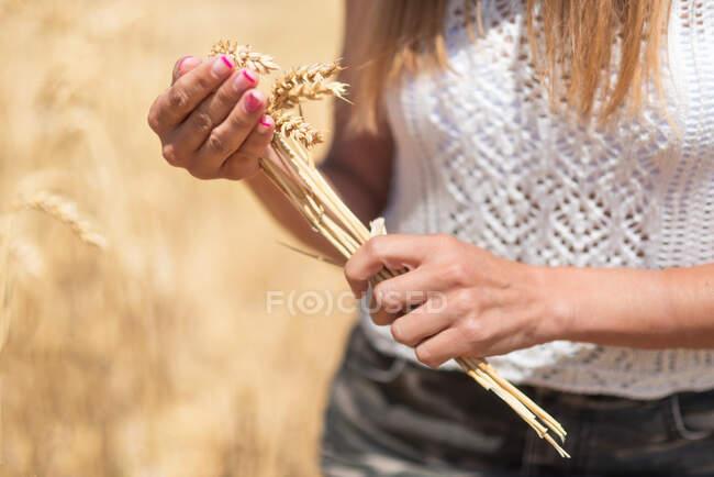 Mulher de colheita com grama de cereais no prado — Fotografia de Stock