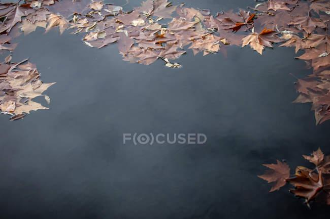 El arce anaranjado deja flotando sobre la superficie de las aguas tranquilas de estanques en el parque otoñal. - foto de stock