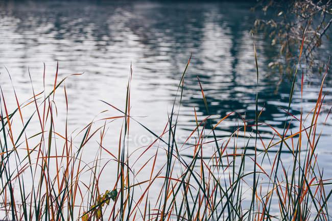 Orange plants around of calm pond water in autumn park — Stock Photo