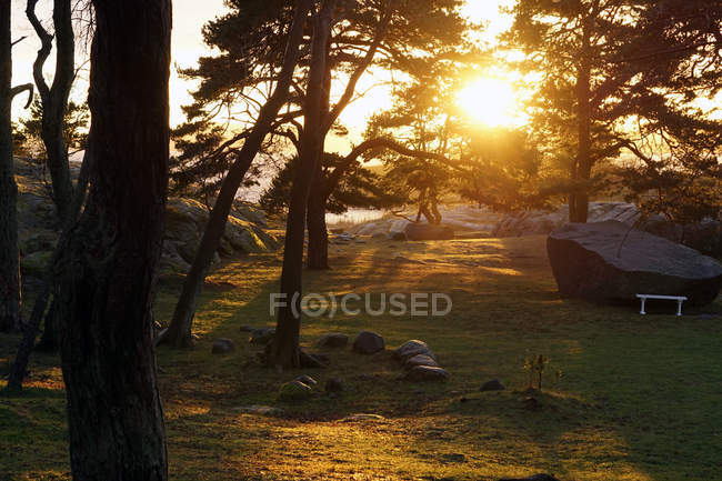 Tranquil woods with evergreen trees with rocks at lake in sun rays — Stock Photo