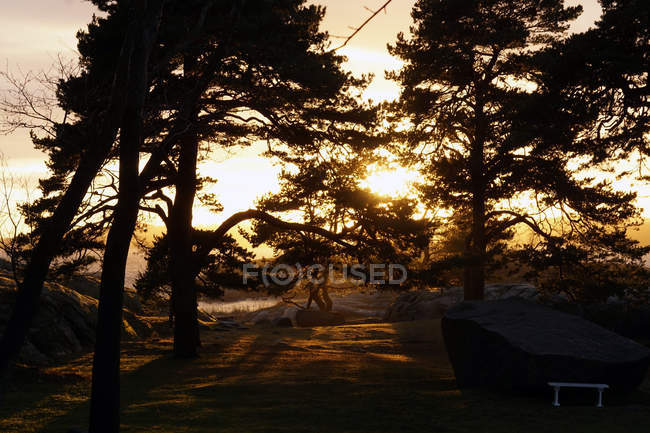 Florestas tranquilas com árvores sempre verdes com rochas no lago em raios de sol — Fotografia de Stock