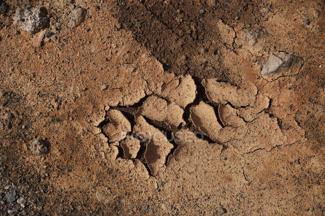 From above dry brown ground surface with cracks and spots on daytime - foto de stock