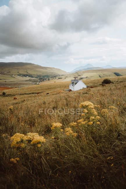 Живописный пейзаж одинокого белого здания на лужайке с цветущими цветами у ферм и высоких гор в дневное время — стоковое фото