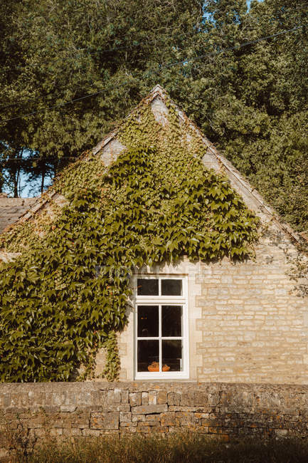 Уютный каменный дом, покрытый растением плющ в деревне Замок Комб Дорсе в солнечный день — стоковое фото