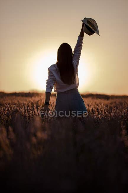 Visão traseira da elegante jovem fêmea em grande campo de lavanda no campo ao pôr do sol . — Fotografia de Stock