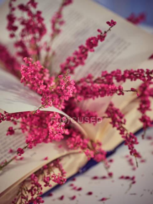 Twigs com flores em livro em páginas de livro aberto — Fotografia de Stock