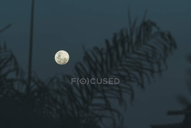 Amazing view of full moon on dark gray sky near blurred black silhouette of coniferous branch during clear weather at quiet night — Stock Photo