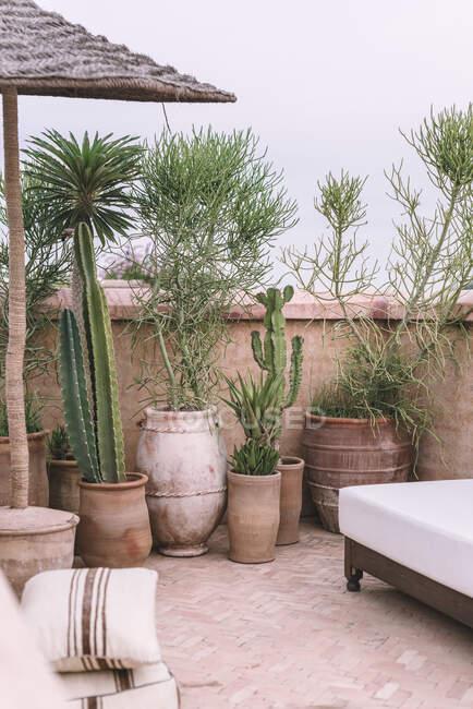 Pentole con piante tropicali e comodo divano situato sulla terrazza contro cielo coperto a Marrakech, Marocco — Foto stock
