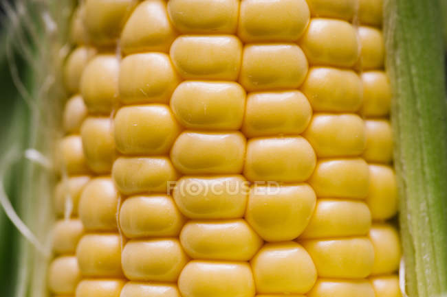 Fresh yellow corn kernels in rows, close-up — Stock Photo
