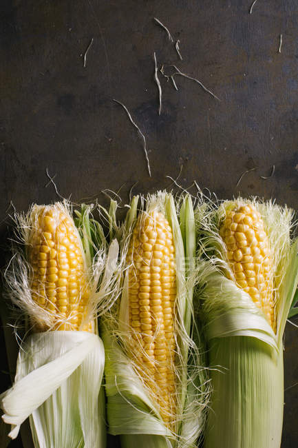 Сверху расположения свежесобранных кукурузных початков на черном фоне — стоковое фото