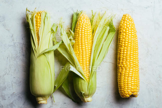Arrangement of fresh harvested corn cobs on grey marble background — Stock Photo