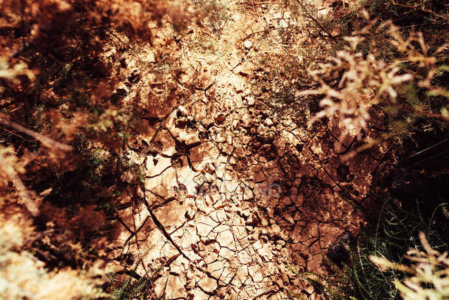 From above of cracked dry ground and vegetation — Stockfoto