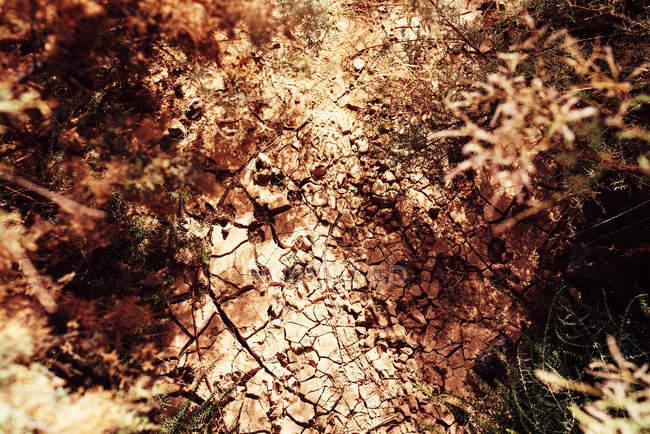 Du dessus du terrain sec fissuré et de la végétation — Photo de stock